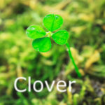 sou.universeのオリジナル曲の Clover