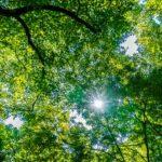 美しい緑の木と森の中の木漏れ日。