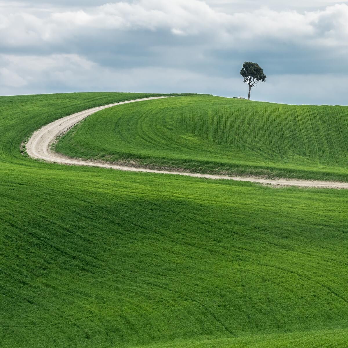 緑の丘に1本の木が立っている。そこまで一本道が通っている。