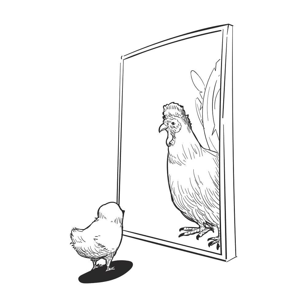 ヒヨコが鏡をみている。鏡には立派な鶏冠のにわとりが移っている様子