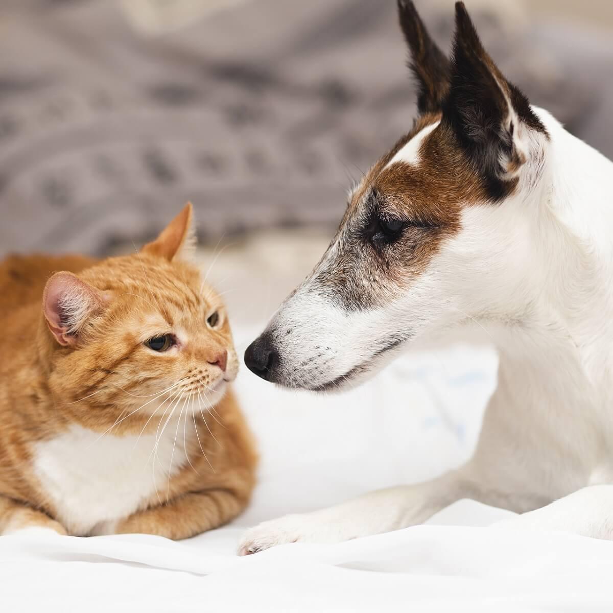 犬と猫の写真。