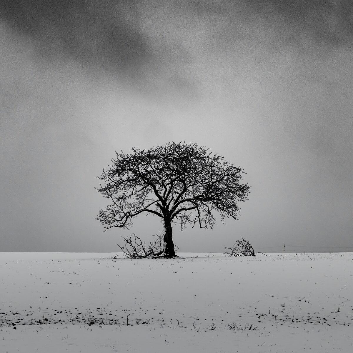 雪山に立つ一本の枯れた木の写真。