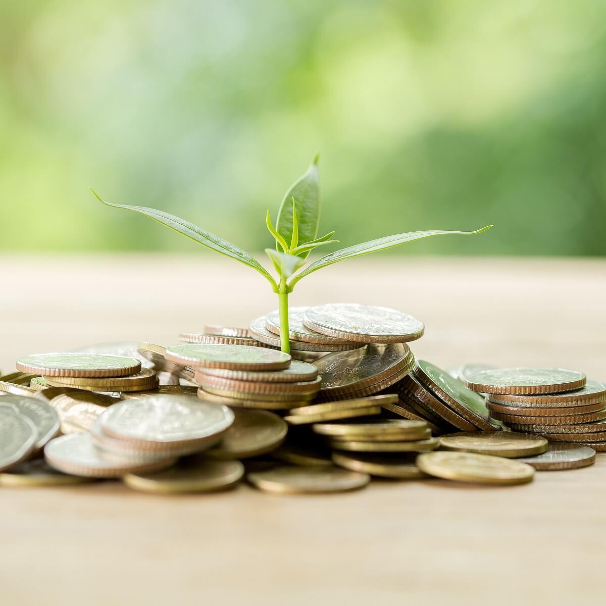 お金からプラントの芽が育っている様子。